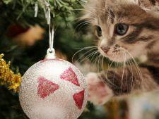Protejeaza-ti pisica de Sarbatori! Iata la ce pericole este supusa fara sa-ti dai seama
