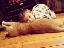 Un baietel si o pisica abandonata, de nedespartit