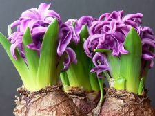 All what needs to know about the bulbs planting spring