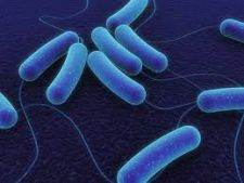 All what needs to know about the infection with e. coli