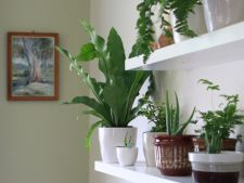 Care plant  ! apartment 5 mistakes major on the that you you do
