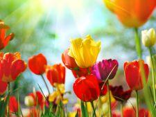 Horoscopul lunii martie! Ce ti-au pregatit astrele in prima luna de primavara