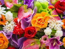 Horoscop floral! Ce floare te reprezinta in functie de zodie
