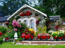 5 flori superbe pentru o gradina plina de culoare