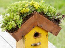 Cum sa construiesti o casuta cu acoperis verde pentru pasari