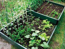 Plante companion – 6 combinatii fericite pentru gradina ta