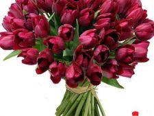 Expertul Acasa.ro, Andreea Uceanu: Florile-vedeta ale lunii aprilie