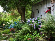 Ai o gradina umbroasa? Ce plante sa alegi pentru a obtine un loc perfect pentru relaxare