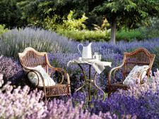 Decorate your garden lavender with  ! What needs to you know