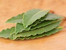 Cum sa utilizezi frunzele de dafin pentru parfumarea casei
