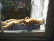 Tu stii care este cea mai mare bucurie a pisicilor?