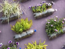 How to create a garden vertical with money few