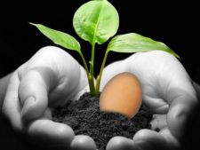 Water in that vs eggs  , for beneficial plants