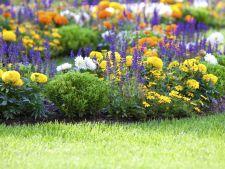 Clendarul gradinarului in luna mai. Iata ce poti planta luna aceasta