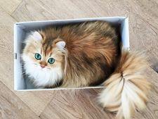 Smoothie, cea mai fotogenica pisica, a cucerit internetul