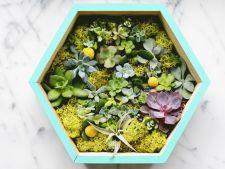 "Cum sa realizezi un ""tablou"" din plante suculente"