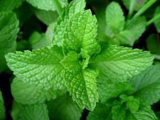 Herb that you the to insects away of the House Garden your what  ! benefits other features