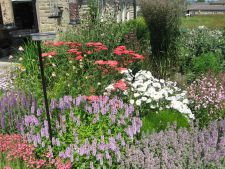 Gorgeous flowers  , the drought-resistant  , for a garden colour in the hot days summer