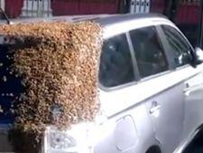 Masina, urmarita de 2.000 de albine timp de doua zile! VIDEO