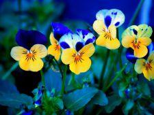 3 flori viu colorate pe care sa le plantezi in iunie pentru a-ti colora gradina intreaga toamna
