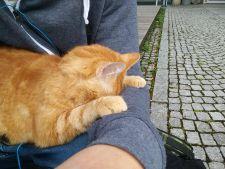 Sammy, pisica ce merge zilnic la facultate!