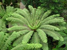Ferns, décor perfect for a garden umbroasa. how we care