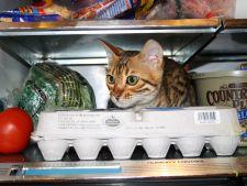 5 modalitati simple pentru a racori pisica in timpul verii
