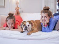 Interviu Mihai Nae, dresor canin: Stai la garsoniera? Iata ce caine poti adopta!