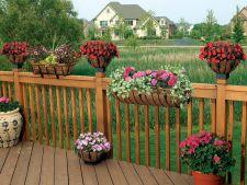 4 flori superbe, perfecte pentru decorarea terasei in timpul verii