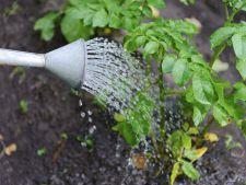 Udarea si ingrijirea gradinii de legume, in zilele caniculare