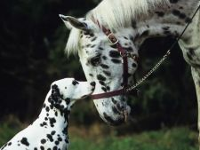 Bizar: Animale din specii diferite, care arata identic! Asemanarea este uimitoare