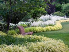 5 types of  , ornamental grass perfect for the garden decorating