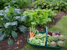 4 errors for the that gardening and you you do in month august