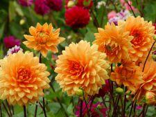 Gradina de toamna, un vis in culori vesele! Florile perfecte pentru orice gradinar