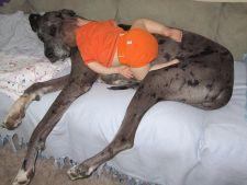 Poze amuzante care dovedesc ca cei mici pot dormi oriunde si oricand
