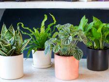 5 plante de interior care te ajuta sa dormi mai bine