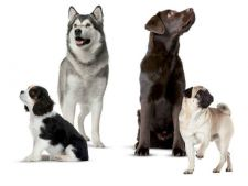 Dam startul distractiei la DogFest!