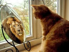 Te-ai intrebat vreodata ce vad animalele cand se uita in oglinda? Iata raspunsul!
