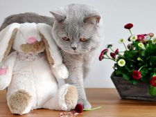 Iti doresti o pisica de rasa pura? Iata cati bani trebuie sa scoti din buzunar