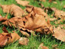 5 activitati de gradinarit pe care trebuie sa le faci toamna aceasta