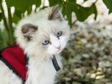 Cele mai frumoase 250 de pisici din toata lumea, la SofistiCAT, in acest week-end