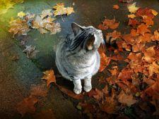 Toamna, sezonul in care animalele de companie au nevoie de ingrijiri speciale