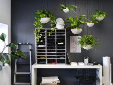 Muta gradina in interior! Idei ingenioase pentru o casa plina de flori