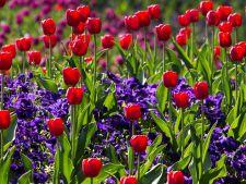 3 flori cu bulbi pe care sa le plantezi acum in gradina pentru a te bucura de frumusetea lor in primavara