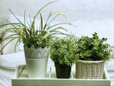 Suferi de insomnii? Decoreaza-ti casa cu plante!