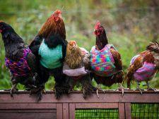 Vine iarna! Tu ai pregatit pulovere pentru animalele tale?