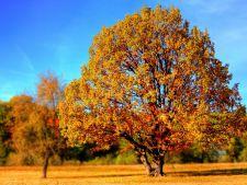 Compostul de calitate se obtine din frunze uscate