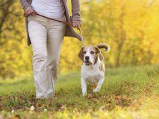 De ce trebuie sa plimbi zilnic cainele, timp de minim o ora