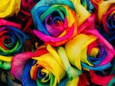 Cum sa obtii acasa, trandafiri in culorile curcubeului VIDEO