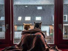 Dragoste fara limite! Doua pisici ce sunt de nedespartit